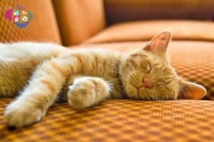 Kedilerde Hepatik Lipidoz (Karaciğer Yağlanması)