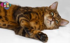 Kedilerde Kısırlaştırmanın Faydaları