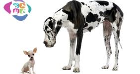 Yavru Köpek Alırken Dikkat Edilecek Hususlar