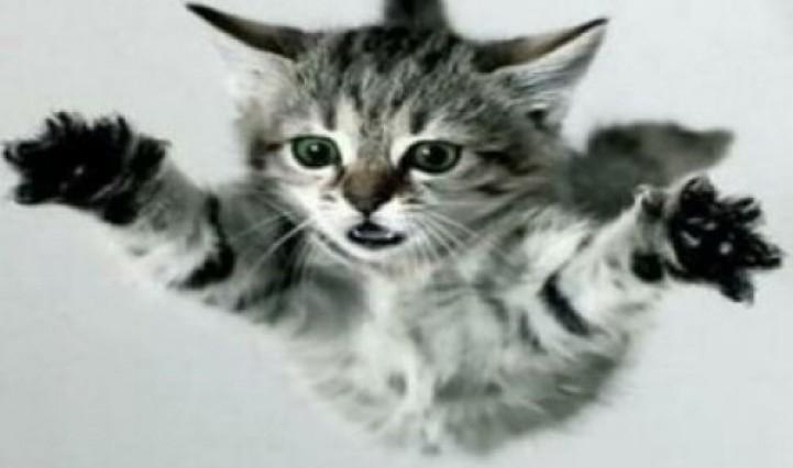 Kediler Neden Hep Dört Ayak Üzerine Düşerler ?