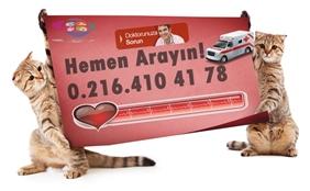 Kadıköy Acil Veteriner