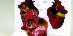 KALP KURDU – Dirofilaria – Heartworm